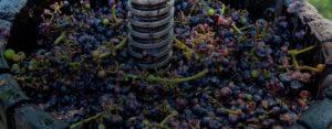 Nuestro Vino - Bodega Del Águila